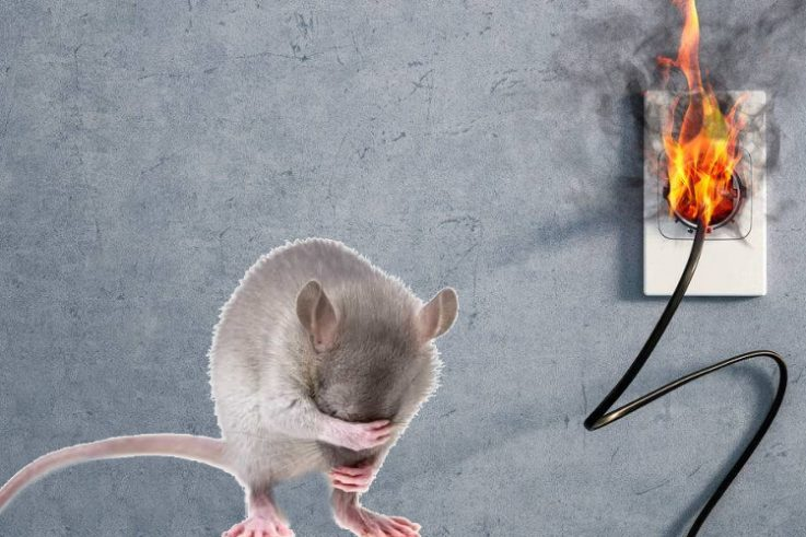 Protect Your Electrical System from Rodents