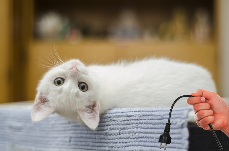How to Keep Your Cat from Chewing Electrical Cords